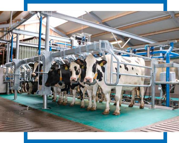 Оборудование для ферм в России представит официальный дистрибьютор Fullwood Packo - группа компаний Промтехника
