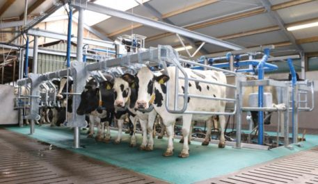 Фото оборудования зала для доения коров от компании Промтехника